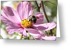 Sweet Bee On Pink Cosmos Greeting Card