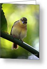 Sweet Bird On Branch Greeting Card
