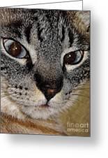Cat - Sweet - Boy Greeting Card