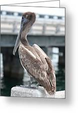 Sweet Brown Pelican - Digital Painting Greeting Card