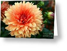 Sweet Dahlia Greeting Card