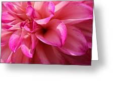 Sweet Dahlia Greeting Card
