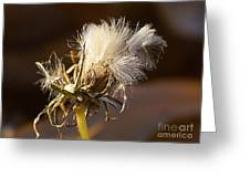 Sweet Dandelions Iv Greeting Card