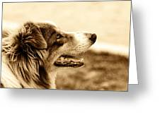 Sweet Doggie Greeting Card