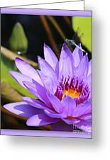 Sweet Dragonfly On Purple Water Lily Greeting Card