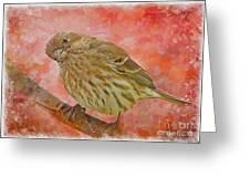 Sweet Female House Finch 3 - Digital Paint Greeting Card