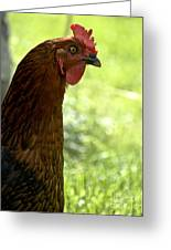 Sweet Hen Greeting Card