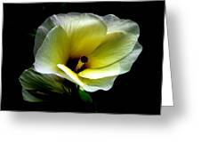 Sweet Hibiscus Greeting Card