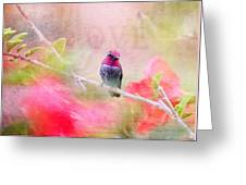 Sweet Hummingbird Love Greeting Card