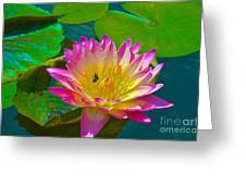 Sweet Lilly Nectar Greeting Card