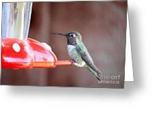 Sweet Little Hummingbird On Feeder Greeting Card