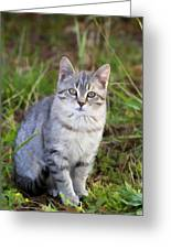 Sweet Little Tabby Kitten Greeting Card