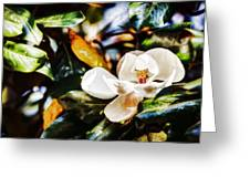 Sweet Magnolia Blossom Greeting Card