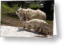 Sweet Mama Goat Greeting Card
