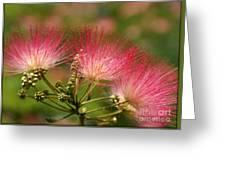 Sweet Mimosa Greeting Card