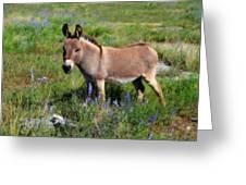 Sweet Miniature Donkey Greeting Card