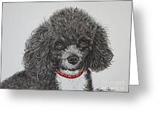 Sweet Miss Molly The Poodle Greeting Card