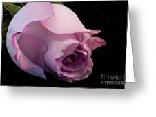 Sweet Onament -the Rose Greeting Card