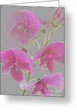 Sweet Pea Flowers Converted To Coloured Pencil Drawing Greeting Card