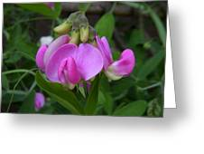 Sweet Pea Perfection Greeting Card