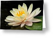 Sweet Peach Water Lily Greeting Card