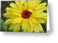 Sweet Petals Greeting Card