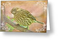 Sweet Pose Female Housefinch Greeting Card