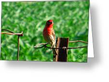 Sweet Red Greeting Card