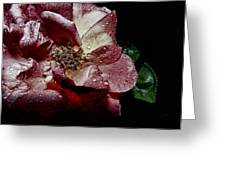 Sweet Rose Greeting Card