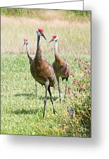 Sweet Sandhill Crane Family Greeting Card