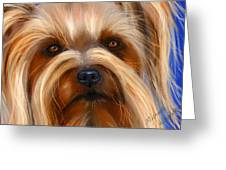 Sweet Silky Terrier Portrait Greeting Card