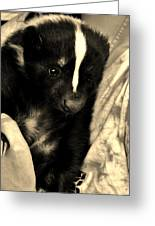 Sweet Sleepy Skunk Greeting Card