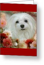 Sweet Snowdrop Greeting Card