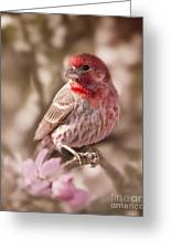 Sweet Songbird Greeting Card