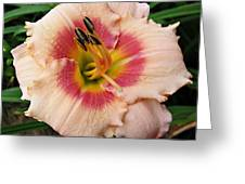 Sweet Sugar Candy Daylily Greeting Card