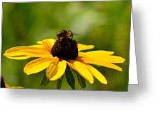 Sweet Summer Greeting Card