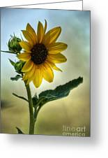 Sweet Summer Sunflower Greeting Card