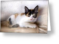 Sweet The Kitten Greeting Card