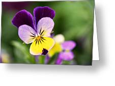 Sweet Violet Greeting Card