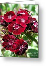 Sweet William Named Sooty Greeting Card