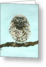 Sweetest Baby Owl Greeting Card