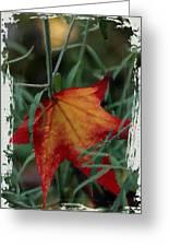 Sweetgum Leaf Greeting Card