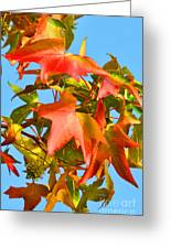 Sweetgum Leaves In Autumn Greeting Card