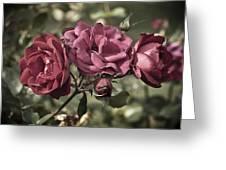 Sweetly Pink Greeting Card