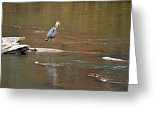 Sweetwater Creek Heron Greeting Card