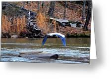 Sweetwater Heron In Flight Greeting Card