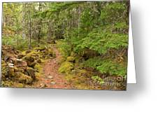 Swim Lake Trail Greeting Card
