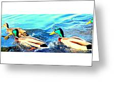 Some Ducks Are Just Happily Swimming With Their Team  Greeting Card