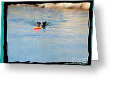 Swimmer In The Truckee River Greeting Card