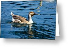 Swimming African Brown Goose Greeting Card